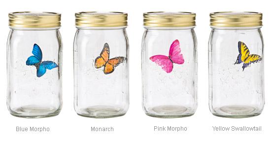 A imagem mostra quatro frascos com as borboletas disponíveis.