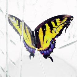 A imagem mostra as 4 espécies de borboletas disponíves.